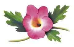 acheter Harpagophytum
